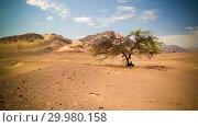Купить «Desert around Ancient preinca nazca civilisation cemetery of Chauchilla, Nazca, Peru», фото № 29980158, снято 11 марта 2018 г. (c) Сергей Майоров / Фотобанк Лори