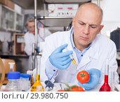 Купить «Scientist injecting reagent into tomatoes», фото № 29980750, снято 24 января 2019 г. (c) Яков Филимонов / Фотобанк Лори