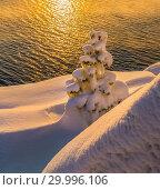 Купить «Новогодние сосны в снегу. Зимний закат на островах Ладожского озера. Морозный закат и деревья в пушистом снегу.», фото № 29996106, снято 23 января 2018 г. (c) Лашков Фёдор / Фотобанк Лори