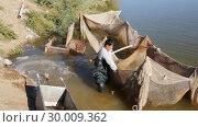 Купить «Работник на рыбной ферме вытаскивает из сетей рыбу и бросает ее в ящик», видеоролик № 30009362, снято 20 октября 2016 г. (c) Юлия Бабкина / Фотобанк Лори