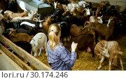Купить «Positive woman owner of dairy goat farm», видеоролик № 30174246, снято 29 января 2019 г. (c) Яков Филимонов / Фотобанк Лори