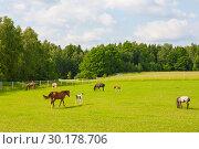 Купить «Животные и их детеныши. Лошади.», эксклюзивное фото № 30178706, снято 14 июня 2009 г. (c) Владимир Чинин / Фотобанк Лори