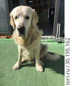 Dog in Nicosia, Cyprus. Стоковое фото, фотограф Andre Maslennikov / age Fotostock / Фотобанк Лори