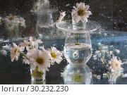 Купить «Still life with a bouquet of chrysanthemums behind wet glass», фото № 30232230, снято 29 октября 2010 г. (c) Марина Володько / Фотобанк Лори