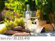 Купить «White wine, cheese, bread and grapes in vineyard», фото № 30233410, снято 22 мая 2019 г. (c) Яков Филимонов / Фотобанк Лори