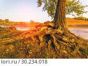 Купить «The bizarre plexus of the bare roots of a tree standing on the bank of a river.», фото № 30234018, снято 1 сентября 2018 г. (c) Акиньшин Владимир / Фотобанк Лори