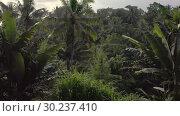 Купить «Woman in white swimsuit in outdoor pool on green jungle background», видеоролик № 30237410, снято 23 января 2019 г. (c) Andriy Bezuglov / Фотобанк Лори