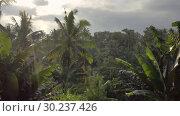 Купить «Woman in white swimsuit in outdoor pool on green jungle background», видеоролик № 30237426, снято 23 января 2019 г. (c) Andriy Bezuglov / Фотобанк Лори