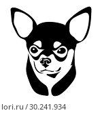 Portrait of the Chihuahua. Стоковая иллюстрация, иллюстратор Сергей Лаврентьев / Фотобанк Лори