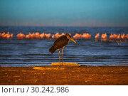 Stork and pink flamingoes on the lake. Стоковое фото, фотограф Сергей Новиков / Фотобанк Лори