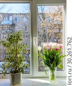 Купить «Цвет в горшке и букет тюльпанов стоят на подоконнике», эксклюзивное фото № 30261762, снято 18 февраля 2019 г. (c) Игорь Низов / Фотобанк Лори