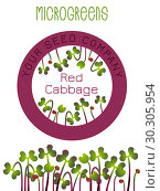 Microgreens Red Cabbage. Seed packaging design, round element in the center. Sprouting seeds of a plant. Стоковая иллюстрация, иллюстратор Юлия Фаранчук / Фотобанк Лори