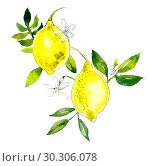 Lemons. Watercolor hand drawing illustration. Стоковая иллюстрация, иллюстратор Мария Кутузова / Фотобанк Лори