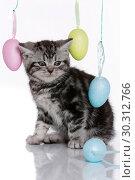 Купить «British Shorthair Kitten», фото № 30312766, снято 12 марта 2019 г. (c) age Fotostock / Фотобанк Лори