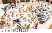 Купить «a large selection of fresh fish lying in the ice on the counter of the supermarket. Text in Russian: salmon, steak, piece, carp, Sylvia, pollock, cod, Atlantic, smelt, herring, trout, sea bass, catfish, Burbot, mackerel, bream, pike, Amur, crucian carp», фото № 30314286, снято 1 марта 2019 г. (c) Акиньшин Владимир / Фотобанк Лори