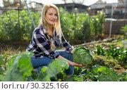 Купить «Woman harvesting cabbage at farm», фото № 30325166, снято 28 февраля 2019 г. (c) Яков Филимонов / Фотобанк Лори