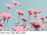 Купить «Close up abstract surrealism pink flowers», фото № 30347230, снято 31 марта 2018 г. (c) Kira_Yan / Фотобанк Лори