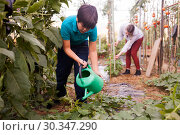 Купить «Boy watering different seedlings with watering pot in sunny greenhouse», фото № 30347290, снято 13 августа 2018 г. (c) Яков Филимонов / Фотобанк Лори
