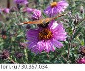 Бабочка. Стоковое фото, фотограф Елизарова Ирина / Фотобанк Лори