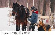 Купить «Winter time. A woman sets the saddle on the horse», видеоролик № 30367918, снято 23 июля 2019 г. (c) Константин Шишкин / Фотобанк Лори