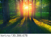 Купить «Forest summer landscape - forest trees with grass on the foreground and sunlight shining through the trees», фото № 30386678, снято 25 мая 2018 г. (c) Зезелина Марина / Фотобанк Лори