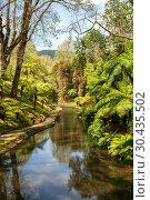 Купить «Tropical Park in Furnas, Azores», фото № 30435502, снято 6 мая 2012 г. (c) Юлия Бабкина / Фотобанк Лори