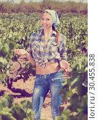 Купить «Woman gardener standing among grapes trees», фото № 30455838, снято 22 сентября 2019 г. (c) Яков Филимонов / Фотобанк Лори