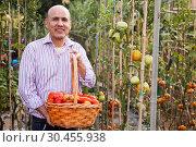 Купить «Gardener with tomatoes harvest», фото № 30455938, снято 16 августа 2018 г. (c) Яков Филимонов / Фотобанк Лори