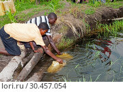 Collecting drinking water from a pool in Uganda. Стоковое фото, фотограф Farm Images \ UIG / age Fotostock / Фотобанк Лори