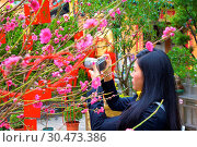 Cherry blossom trees with Lai See Red Envelopes for Chinese New Year, Hong Kong, China, Asia (2018 год). Редакционное фото, фотограф Neil Farrin / age Fotostock / Фотобанк Лори