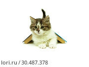 Купить «Kitten lying under a book on a white background», фото № 30487378, снято 15 ноября 2014 г. (c) Ласточкин Евгений / Фотобанк Лори