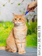 Купить «Drops from fleas and ticks for cats», фото № 30488178, снято 21 марта 2019 г. (c) Okssi / Фотобанк Лори
