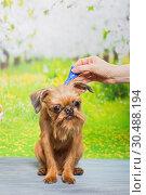 Купить «Dog drip drops from fleas and ticks», фото № 30488194, снято 21 марта 2019 г. (c) Okssi / Фотобанк Лори