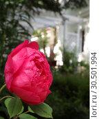 Роза. Стоковое фото, фотограф Елизарова Ирина / Фотобанк Лори