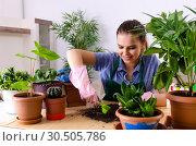 Купить «Young female gardener with plants indoors», фото № 30505786, снято 26 ноября 2018 г. (c) Elnur / Фотобанк Лори