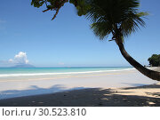 Palm tree against blue sky and blue ocean. Стоковое фото, фотограф Моисеев Дмитрий / Фотобанк Лори
