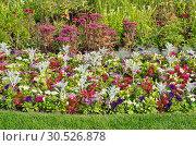 Купить «Красивые садовые цветы на клумбе», фото № 30526878, снято 10 сентября 2017 г. (c) Елена Коромыслова / Фотобанк Лори