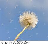 Dandelion on the sky. Стоковое фото, фотограф Tryapitsyn Sergiy / Фотобанк Лори