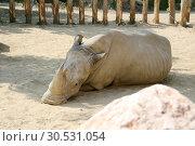 Rhinoceros. Стоковое фото, фотограф Tryapitsyn Sergiy / Фотобанк Лори