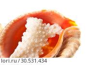 Coral in seashell. Стоковое фото, фотограф Tryapitsyn Sergiy / Фотобанк Лори