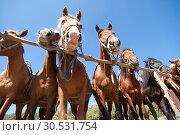 Купить «Horses on ranch», фото № 30531754, снято 11 сентября 2010 г. (c) Tryapitsyn Sergiy / Фотобанк Лори
