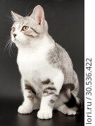 Купить «Little tabby kitten», фото № 30536422, снято 20 февраля 2011 г. (c) Tryapitsyn Sergiy / Фотобанк Лори