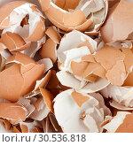 Eggshell cracks. Стоковое фото, фотограф Tryapitsyn Sergiy / Фотобанк Лори