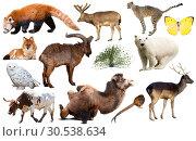 Купить «asia animals isolated», фото № 30538634, снято 20 июня 2019 г. (c) Яков Филимонов / Фотобанк Лори