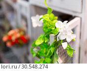 Купить «Beautiful liana of bright flowers», фото № 30548274, снято 29 мая 2014 г. (c) Tryapitsyn Sergiy / Фотобанк Лори