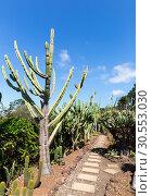 Купить «Cacti in the garden», фото № 30553030, снято 20 июля 2015 г. (c) Tryapitsyn Sergiy / Фотобанк Лори