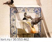 Купить «Pigeons on the fontain», фото № 30553462, снято 15 июля 2015 г. (c) Tryapitsyn Sergiy / Фотобанк Лори