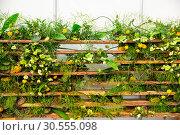 Купить «Flowers round the fence», фото № 30555098, снято 14 апреля 2016 г. (c) Tryapitsyn Sergiy / Фотобанк Лори