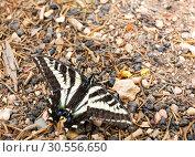 Купить «Close up of butterfly on the ground.», фото № 30556650, снято 22 июня 2016 г. (c) Tryapitsyn Sergiy / Фотобанк Лори