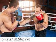 Купить «Boxer sents his opponent to the knockout.», фото № 30562770, снято 7 октября 2016 г. (c) Tryapitsyn Sergiy / Фотобанк Лори